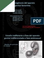 4.-+Organogénesis+del+aparato+genital+femenino[1]