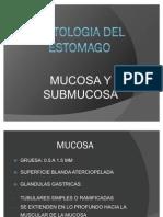Histologia Del Estomago