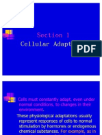 1.3CellularAdaptations (1)