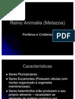 02 Reino Metazoa, Poriferos e Cnidarios