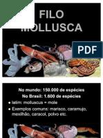 03 FILO MOLLUSCA - Evaldo