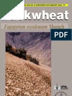 Buckwheat. Fagopyrum esculentum Moench