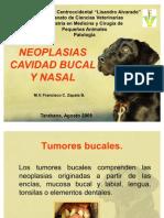 Tumores Bucales y Nasales Patologia