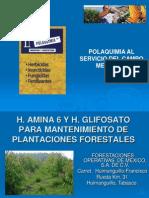 Parcela Demostrativa Plantaciones Forest Ales.