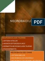 Curs Necrobaciloze Net