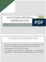 Sistema reprodutor humano