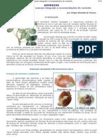 amendoim - pragas  e doenças