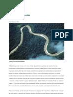 O Brasileiro e as Florestas
