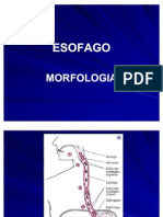 Esofago - Barret. Cancer