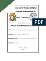 INSPECCION ORGANOLEPTICA DEL PESCADO FRESCO-PRACTICA 1 - TPC