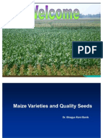 Maize Varieties and Quality Seeds