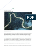 El brasileño y las selvas