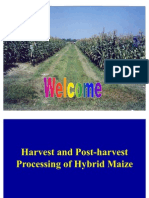 Processing of Maize SSA