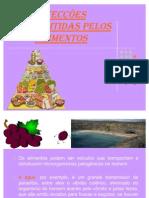 doenças dos alimentos