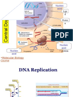 DNA Replication - PW