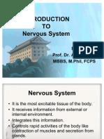 Nervous System C 45