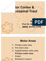 C 55 Motor Cortex & Corticospinal Tract