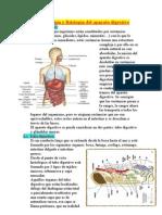 anatomía y fisiología del aparato digestivo