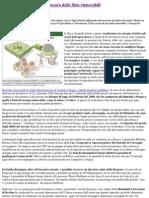 Biomasse e Biogas_ Il Lato Oscuro Delle Finte Rinnovabili