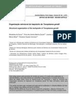 descrição morfologica do taquizoito