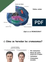 Citogenetica generalidades