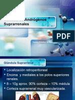 Andrógeno Suprarrenales