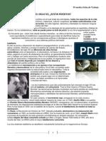 201104192221170.Los Totalitarismos Del Siglo Xx