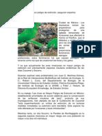 Aves mexicanas en peligro de extinción