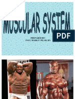 Muscular Sytem