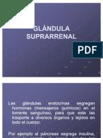 GLÁNDULA SUPRARRENAL