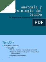 Anatomía y fisiología del tendón