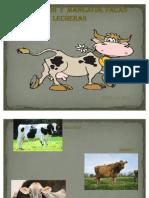 Vacas Lecheras Expo Zoo......Tecnia