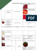 49153440 Bacterial Culture Media in Plate