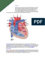 trabajo_de_anatomia[1]