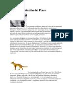 Origen y Evolución del Perro