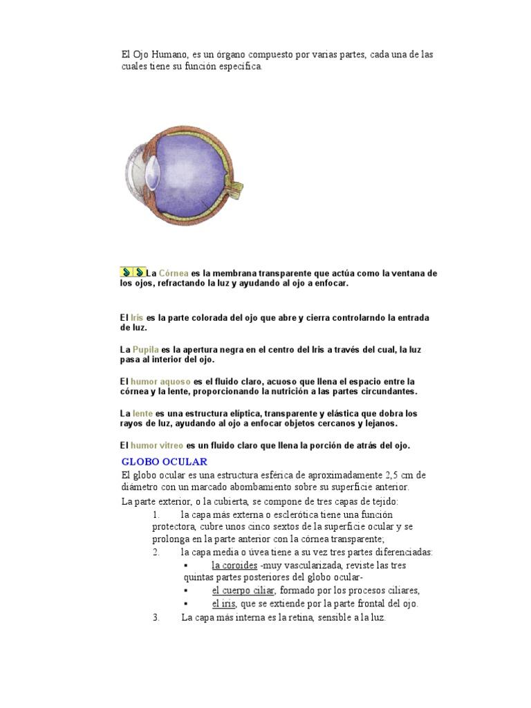 Anatomia Oido y Ojo