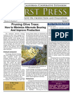 Pruning Olive Trees.. Improve Production