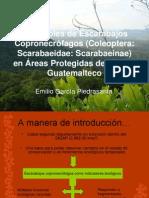 Ensambles de Escarabajos Copronecrófagos (Scarabaeinae) en cuatro áreas protegidas del Caribe Guatemaltecol