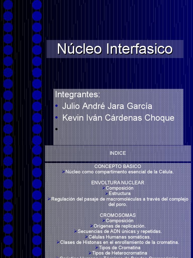Ncleo Interfasico Cromosoma Cromatina
