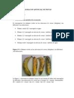 PRÁCTICA N 03_MADURACIÓN ARTIFICIAL N FRUTAS