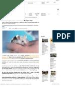 Aumentano Gli Animali Per La Vivisezione in Regno Unito