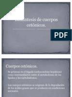 Biosíntesis de cuerpos cetónicos