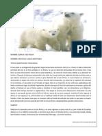 Adaptaciones Oso Polar