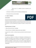 Evaluacion de La Capacidad Fermentativa de Las Levaduras
