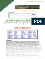 Plantas fumables