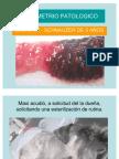 Canino con Endometrio Patológico