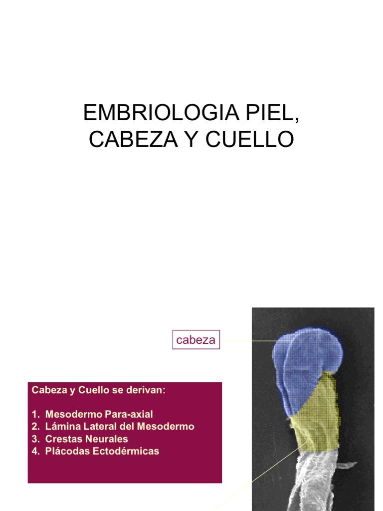 6570902 Embriologia Piel Cabeza y Cuello