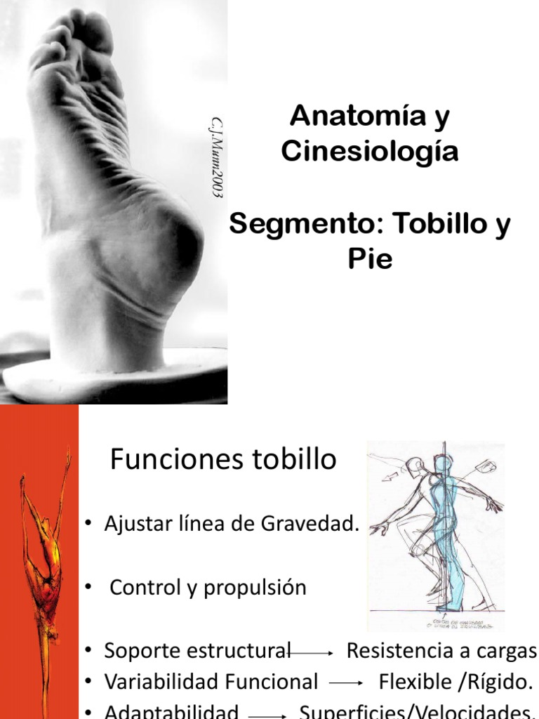 Anatomia Definitiva Tobillo y Pie