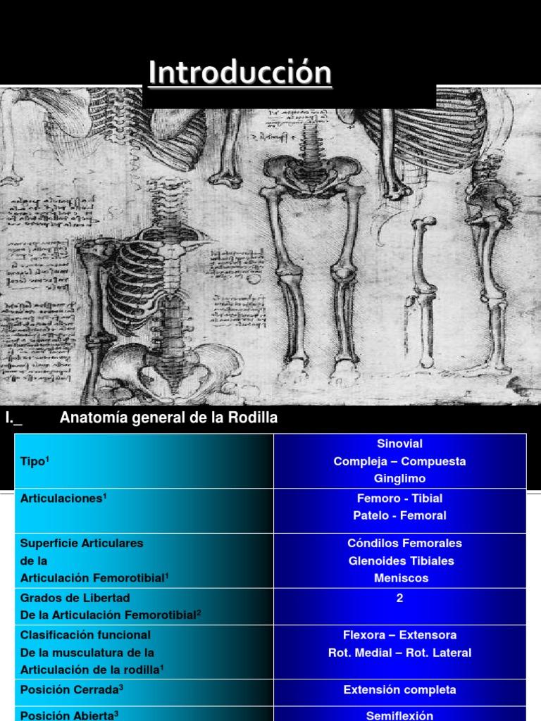 ANATOMIA_DE_RODILLA