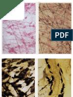 imagenes tejidoconectivo practica